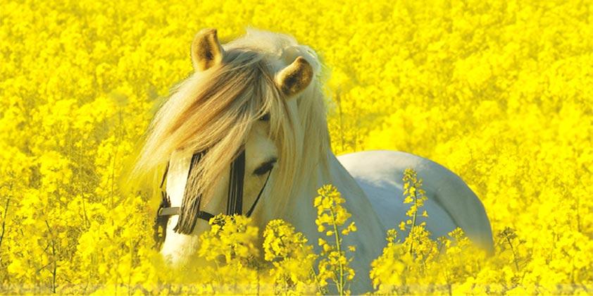 Barockes pferdezubehör